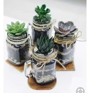 Succulents $15 each