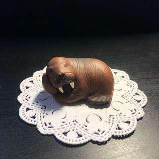 🚚 休眠動物 海獅