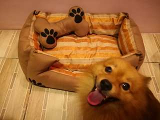 Dog bed (Small dogs)