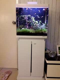 1 Set aquarium + lemari + ikan nya
