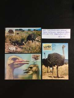 1985 SWA (South West Africa) Three Ostriches Maximum Cards Affixed With Stamps  (Not Set)