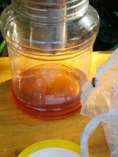 新鮮自養即採純天然蜂蜜 [養顏護膚,增強免疫力,可做面膜面霜敷面或沖水]