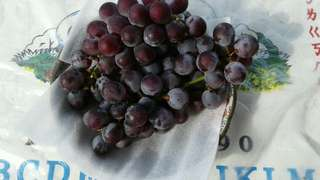 🚚 溪湖葡萄