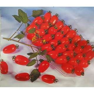 Bibit tomat cherry