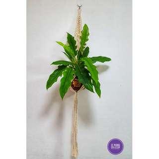🖐 Handmade Macrame Plant Hanger 🖐 H015