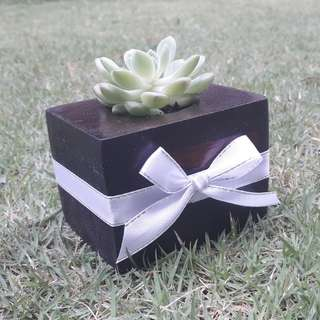 Pinewood Planter Gift/ Wedding Favor/ Succulents