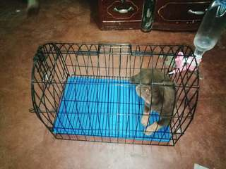 Dog cage (medium) with water feeding bottle