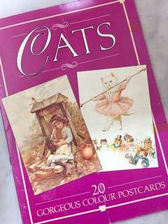CATS 20 GORGEOUS COLOUR POSTCARDS (Paperback)