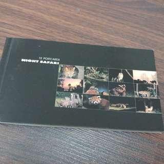 Night Safari Postcards - set of 8