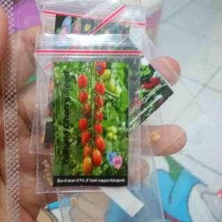 Tomat cerry bibit
