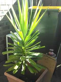 💚loved plant