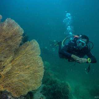 Adventure, Snorkeling, Diving
