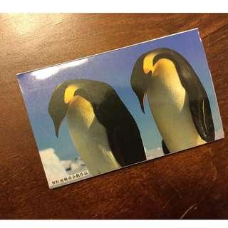 Arctic Penguin Photography Postcard Set