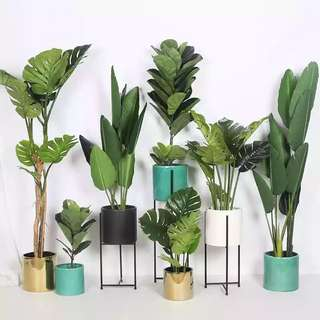Artificial Plant - Monstera, Fiddle Fig, Traveller Palm