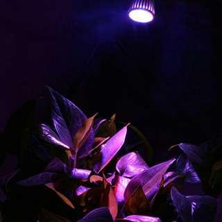 E27-25mm水培盆栽補光燈/5瓦 電壓85-220v