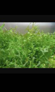🚚 Seaweed