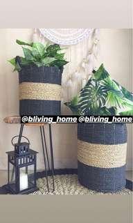Baskets plant
