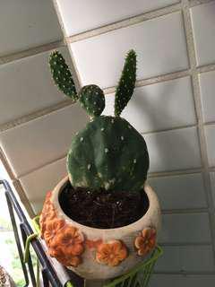 仙人掌🌵 cactus 可防幅射 放在電腦旁 或擋煞一流