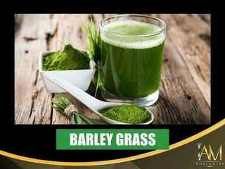 Amazing Barley (Capsule and Pure Powder)
