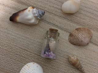 🚚 Seashells in a bottle