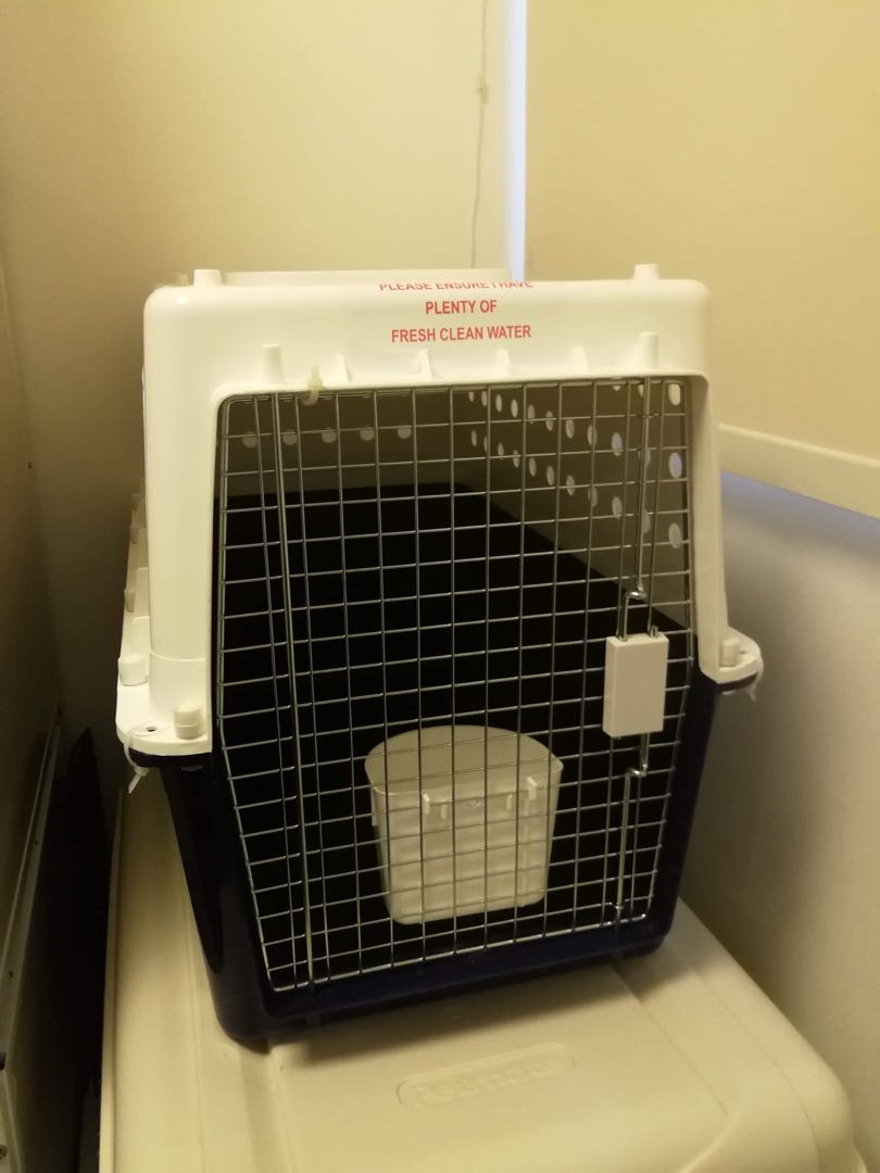 ae315846c7 USED ONCE] AUSTRALIA MADE PP40 AIRLINE APPROVED PET CARRIER LARGE ...