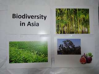 Biodiversity in Asia - BN Glenn Doman Encyclopedic flashcards