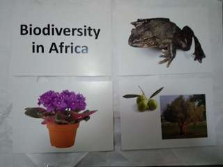 Biodiversity in Africa - BN Glenn Doman Encyclopedic flashcards
