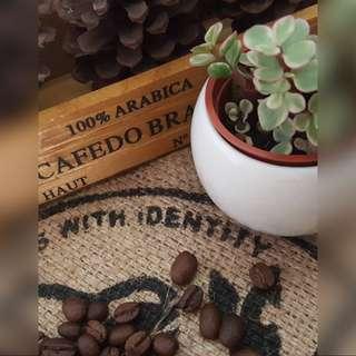 🚚 咖啡豆組合