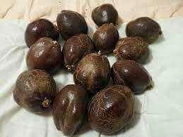 readystock buah zuriat