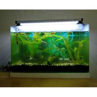 36 x 60 x 30 cm一套(淡水魚缸)