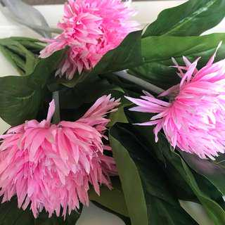 NEW Spider Gerbera Pink