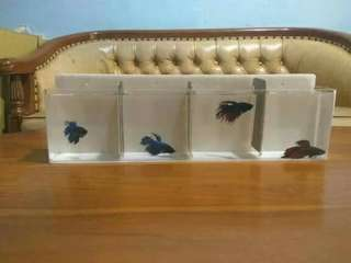 Aquarium mini gantung ikan cupang 4 kamar