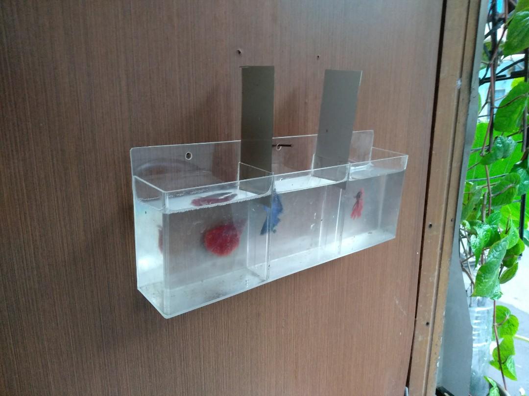 Aquarium Mini Gantung Ikan Cupang Perlengkapan Hewan Aksesoris Hewan Di Carousell