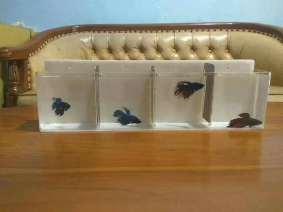 Aquarium Mini Gantung Ikan Cupang 4 Kamar Perlengkapan Hewan Aksesoris Hewan Di Carousell