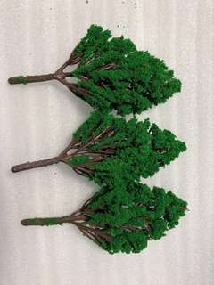 Miniature Poplar tree