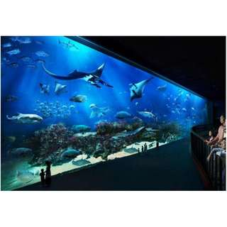 [e-Voucher] Sea Aquarium (Dewasa)