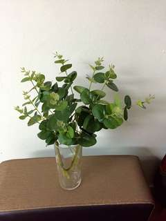 Green leaves with vase