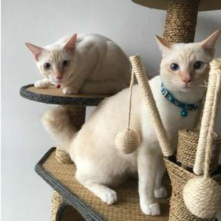 Cat Boarding Available (Transport Islandwide)