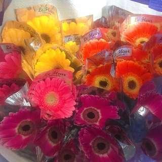 Single stalk Gerbera/rose/carnation