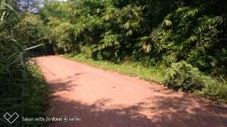 Tanah kebun 1000m di pinggir jalan raya kuripan