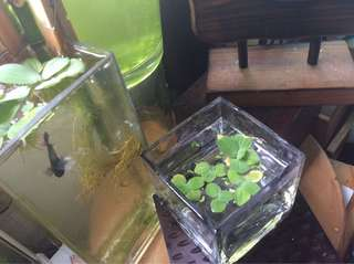 Floating Plants ☘️