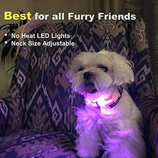 LED Light-up Dog Collar by LumoLeaf, USB Rechargeable with Weather Resistance Flashing Lights, Reflective Nylon Belt