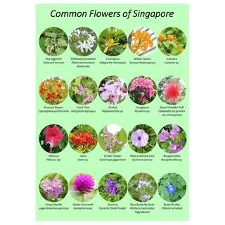 Common flowers of Singapore poster