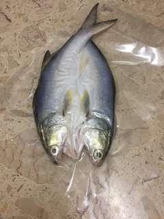 🚚 午仔魚一夜干
