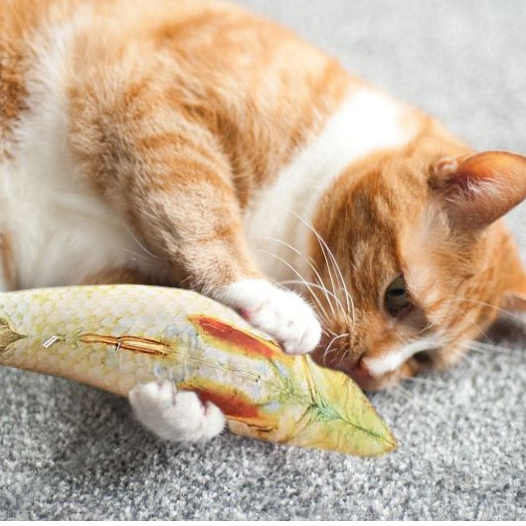 Image result for catnip fish toy