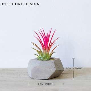 Pot: Concrete Planter (2 Designs)