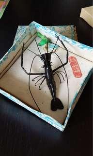 昆蟲標本模型