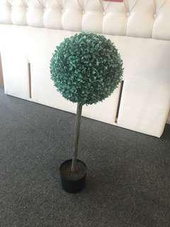 Boxwood Tree 80cm