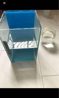 Used fish tank and glass bowl for fish