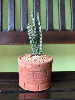 Cactus Sets